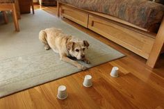 Staying Sharp - Brain Games to Play With Dogs