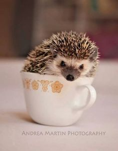 Cute Things in Cups