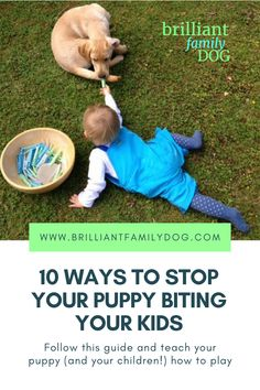 Ouch! Puppy teeth are sharp! Learn how to teach your puppy simply and KINDLY to keep her teeth off your skin, and your children. Brilliant Family Dog is changing the world, one dog at a time |FREE GUIDE | #newpuppy, #dogtraining, #newrescuedog, #puppytraining, #dogbehavior, #puppybiting, #puppynipping | www.brilliantfamilydog.com Dog Training Books, Crate Training, Training Your Puppy, Dog Training Tips, Stop Puppy From Biting, Puppy Biting, Puppy Care, Dog Care, Dog Body Language