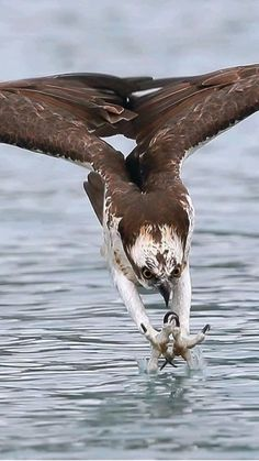 Eagle Images, Eagle Pictures, Nature Animals, Animals And Pets, Cute Animals, Prey Animals, Nature Nature, Wild Life, Wildlife Photography