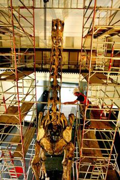 Australian Museum Provides sneak Preview of new Dinosaur Exhibit