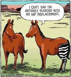 I Can't Say I'm Entirely Pleased With My Hip Replacement - Funny Memes. The Funniest Memes worldwide for Birthdays, School, Cats, and Dank Memes - Meme Medical Humor, Nurse Humor, Funny Horses, Funny Animals, Horse Meme, Humor Ingles, Funny Cute, The Funny, Get Well Funny