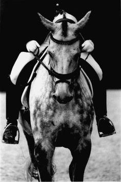Dappled grey horses