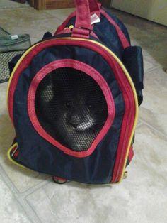 My Tasha in a pet bag