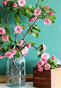 Gorgeous crabapple blooms against a green chalkboard