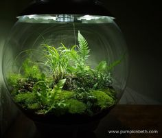 My BiOrbAir from another angle on 29th August 2015.  I love this specialised, automated terrarium.