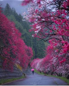 "Blooming peach trees in the rain "" location: Nagano,Japan 📸 by: Japan Landscape, Sky Landscape, Amazing Photography, Landscape Photography, Nature Photography, Travel Photography, Photography Training, Canon Photography, Wonderful Places"