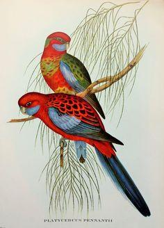 paintings of tropical birds - Pesquisa Google