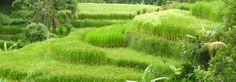 info pratiques | Bali Voyages Evasion | Voyage à Bali sur mesur