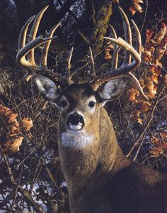 An Autumn Gentleman - Carl Brenders Wildlife Art Wildlife Paintings, Wildlife Art, Animal Paintings, Deer Paintings, British Wildlife, Whitetail Deer Pictures, Deer Photos, Deer Pics, Animals Beautiful