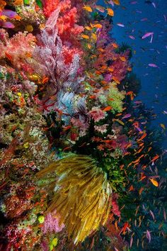 Happiness and Music Rebecca Bains Coral Reef - wow...would love this for my desktop so I could look at it all the time!