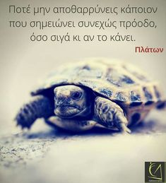 Stealing Quotes, Book Quotes, Life Quotes, Greek Words, Cool Words, Philosophy, Meant To Be, Turtle, Literature