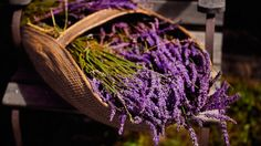 This easy-to-grow herb delights with its beauty and fragrance.