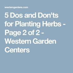 5 Dos and Don'ts for Planting Herbs - Page 2 of 2 - Western Garden Centers