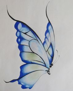 Image result for butterfly drawings with color blue