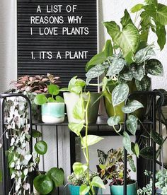"Instead put ""There are no valid reasons to hate plants. Indoor Garden, Indoor Plants, Indoor Herbs, Planting Succulents, Planting Flowers, Plants Quotes, Plant Aesthetic, Plants Are Friends, Green Life"