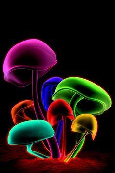 hongos de colores