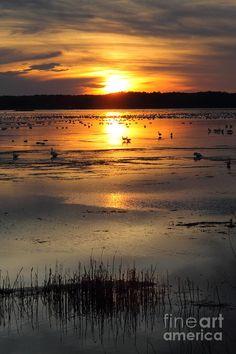 ✯ Sunset on Assateague Island