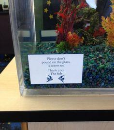 bloglosingrip - fotos engraçadas 15 - Por favor não bata no vidro: isso nos assusta! Obrigado: o peixe... Pelo menos são peixes educados!