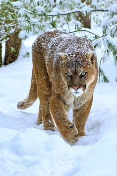 87a0d7ddc8091 472 Best Born to be Wild images in 2019 | Wild animals, Cutest ...