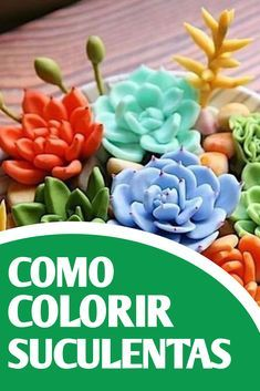Succulent Gardening, Succulents Garden, Organic Gardening, Painted Plant Pots, Inside Plants, Garden Whimsy, Most Beautiful Gardens, Cactus Y Suculentas, Trees And Shrubs