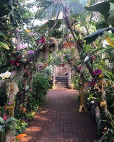 Exquisite tropics in the middle of a wintry week in the middle of Oklahoma City in the middle of the country. #middlemagic #botanicalgardens #myriadbotanicalgardens #oklahomacity #urbantropical