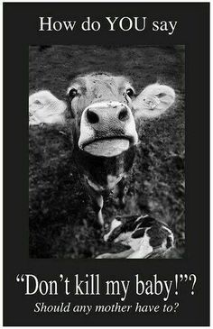 Farm animals are sentient beings too. Just bc you don't think something is cute doesn't mean it should be food. Racing Extinction, Vegan Animals, Farm Animals, Mon Combat, Vegan Quotes, Vegan Memes, Why Vegan, Stop Animal Cruelty, Animal Welfare