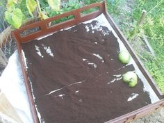 This post is in response to some questions I've received about drying coffee grinds and then how to store them. This becomes important when you are collecting large quantities of used grounds… Uses For Coffee Grounds, Coffee Uses, Household Cleaning Tips, Cleaning Hacks, Coffee Grounds As Fertilizer, Garden Compost, Gardening, Cocoa Tea, Coffee Snobs