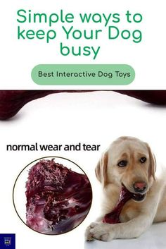 Stop Puppy Biting FAST With… #dogtrainingtips Petsmart Dog Training, Agility Training For Dogs, Best Dog Training, Dog Agility, Leash Training, Toilet Training, Crate Training, Therapy Dog Training, Dog Training Classes