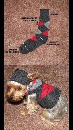 cappotto cagnolino con riciclo calzini