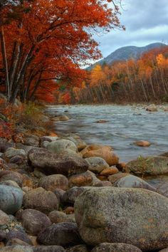 Autumn foliage -- on the river