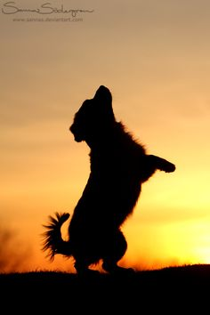 ♥ Animals & Humankind Living under the same sky ♥ Make the connection ♥ Respect Life ♥ Go Vegan ♥ Baby Animals, Funny Animals, Cute Animals, Silhouette Photography, Animal Photography, Cute Dogs And Puppies, I Love Dogs, Cute Dog Wallpaper, Animal Silhouette