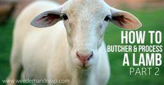 How to Butcher & Process a Lamb part 2