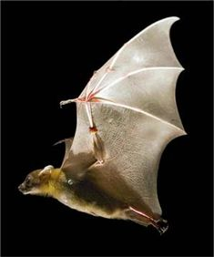 More Than 100 Bat Species Found On Only 5 Acres Of Jungle Mammals