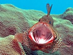 Is it just me, or does this fish look like it has a butthole in its mouth?