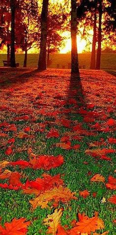 ✯ Autumn sunrise in Mannheim, Baden-Wurttemberg, Germany • photo: aremac
