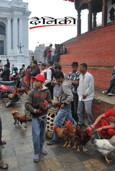 Chicken selling for Dashain, biggest festival