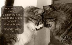 """Restiamo ancora con amore e poesia, cambiando il modo di presentarla: dall'audio all'immagine.  """"Non so se è amor che hai, o amor che fingi, quello che mi dai. Dammelo. Così mi basta."""" Fernando Pessoa – Odi  #pessoa, #amore,"""