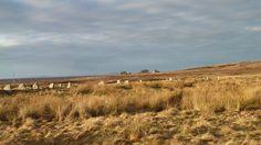 Scotland Standing Stones at Achavanich - Scottish Highlands