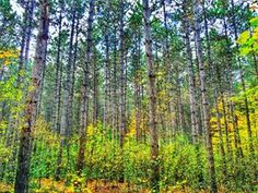 14) Pinhey Forest Trail Near Ottawa lies an entirely new world. Hike the Pinhey Forest Trail and walk through a colourful coniferous forest. There is also a designated picnic area that is the perfect spot to refuel.