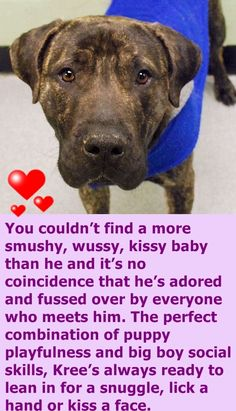 SAFE 2-11-2016 by Zani's Furry Friends Pet Rescue --- Manhattan Center KREE – A1064442 MALE, BR BRINDLE, GREAT DANE MIX, 2 yrs STRAY – STRAY WAIT, NO HOLD Reason STRAY Intake condition EXAM REQ Intake Date 02/05/2016 http://nycdogs.urgentpodr.org/kree-a1064442/