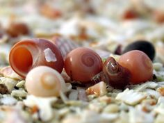 snail shells and glass