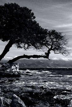 Nature Gone Wild Santa Maria Beach Paros Santa Maria Beach, Paros Island, Sandy Beaches, Greece, Shots, Memories, Photo And Video, World, Amazing