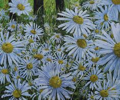 Ox-Eye Daisies by Anthony Skates Heather Love, Learn To Paint, Drawing Techniques, Skates, Ox, Daisies, Painting & Drawing, Eyes, Drawings