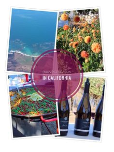 """Traveling to California or the West Coast for the grape harvest (AKA """"Crush""""?) Expect hot weather, blooming gardens, vineyard parties and outdoor wine tastings galore. From Sonoma to Monterey to Santa Barbara, wineries will host harvest fairs and culinary events. #winecountry #california #wine"""