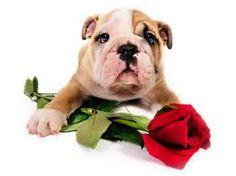happy valentine sms 2013
