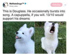 Dog And Puppies Memes .Dog And Puppies Memes Cute Animal Memes, Cute Funny Animals, Funny Dogs, Cute Puppies, Cute Dogs, Jiff Pom, Cocker Spaniel, Dog Rates, We Rate Dogs