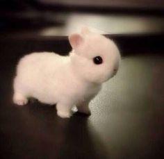 Cutest bunny EVER.