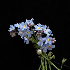 """Bouquet of Forget-Me-Not Flowers  My very favorite!  My sweet Will always called them """"FORGET ME DON'TS""""."""