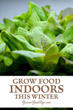 Growing herbs and vegetables indoors is a great way to supplement your diet with fresh, organic foods. Learn how to setup your indoor growing area and discover 13 easy vegetables to grow indoors. growing setup Grow Food Indoors This Winter